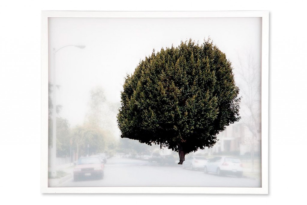 ficus #2 [s. van ness ave. at w. 6th st.]