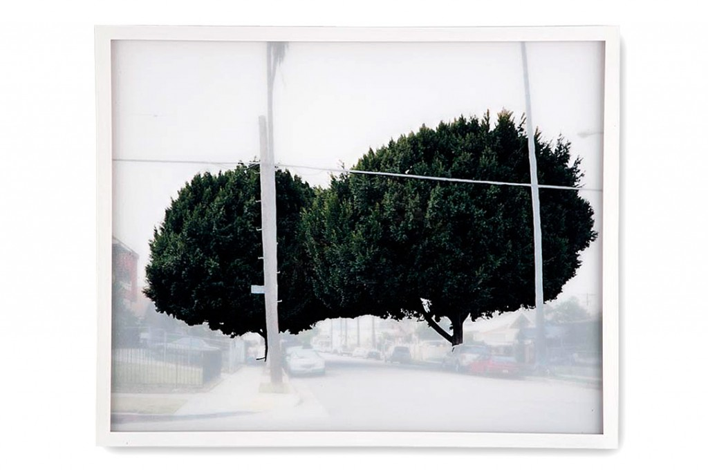 ficus #4 [n. vendome st. at council st. I]