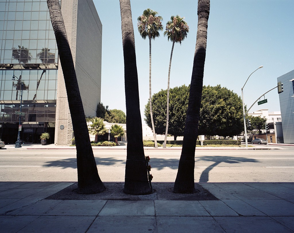 palm #39 [wilshire blvd. at n. la peer dr.]