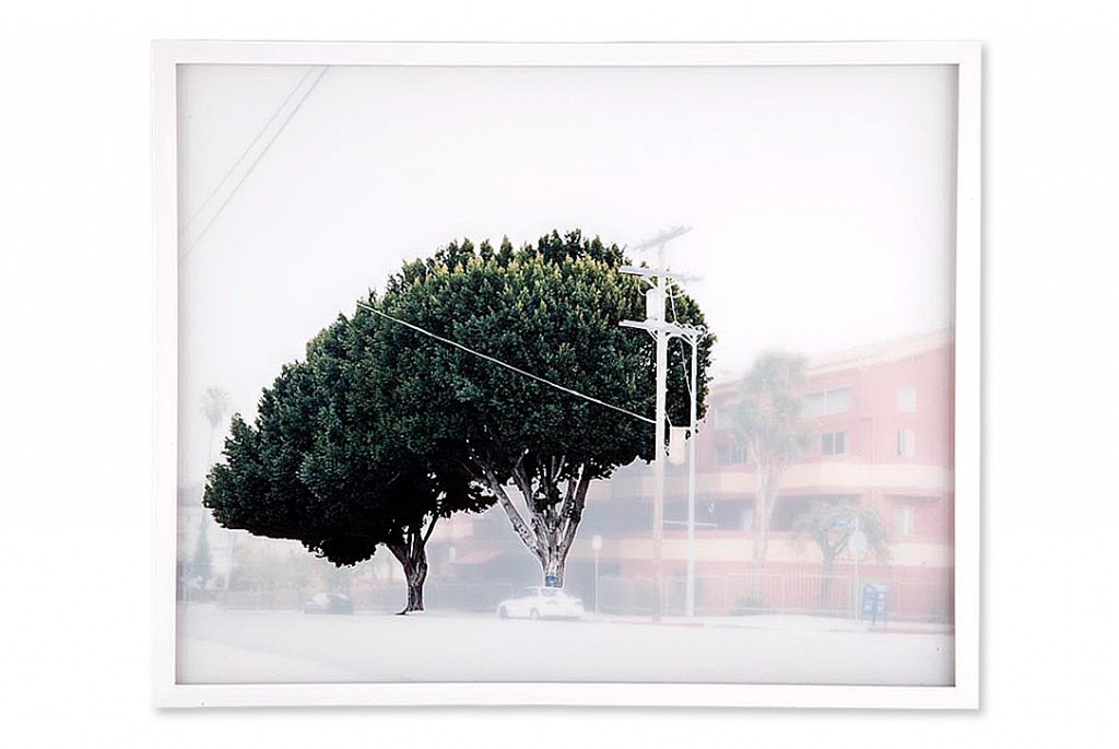 ficus #6 [w. temple st. at n. vendome st.]